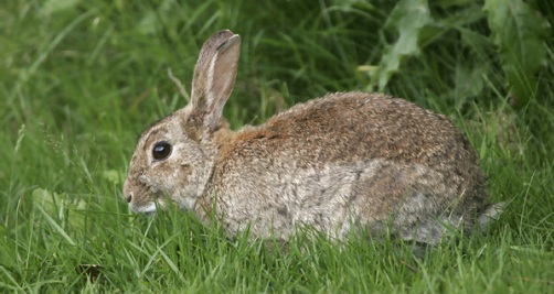 Alimentación para conejos.